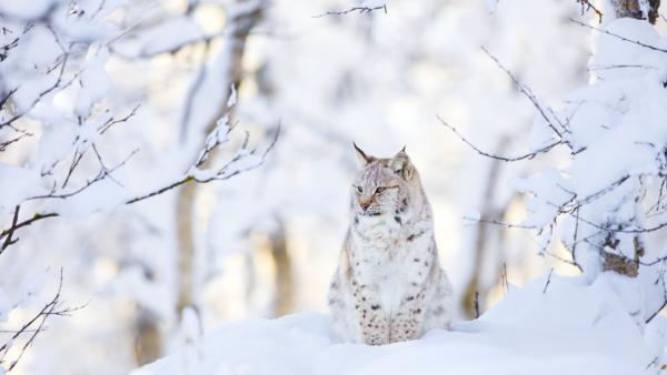 Wildlife in de bergen: deze dieren kun je tijdens je wintersport spotten